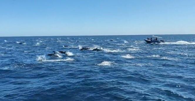 Καλιφόρνια: Εκατοντάδες δελφίνια έκλεψαν την παράσταση
