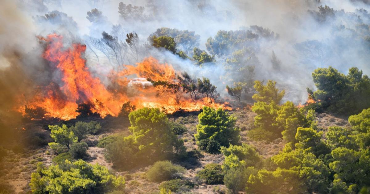 Αλεξανδρούπολη / Αναζωπύρωση των εστιών της πυρκαγιάς στους οικισμούς Μελίας Νίψας