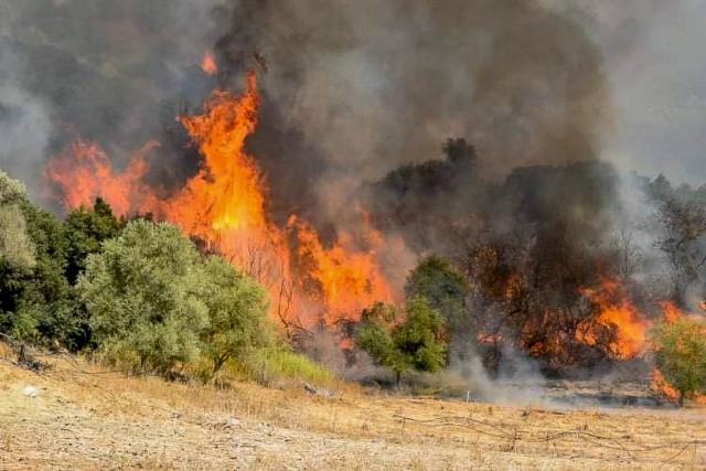 Σε εξέλιξη η φωτιά στην Ηλεία και σε ύφεση η φωτιά στην περιοχή Πουλίτσι Μεσσηνίας